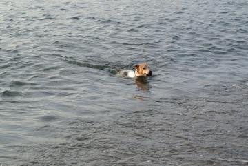 夕日に向かって泳げ。_d0143957_20545938.jpg