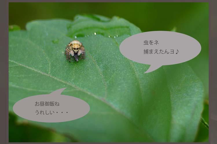 b0190068_1552571.jpg
