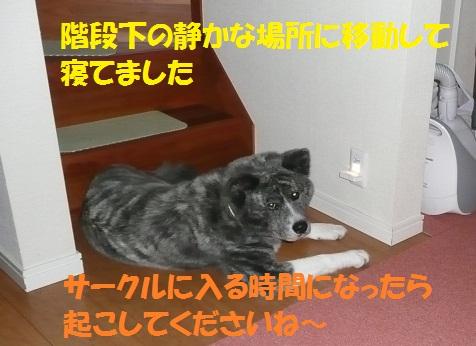f0121712_1324994.jpg
