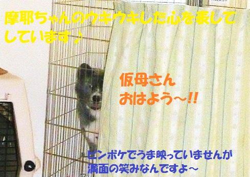 f0121712_1351375.jpg