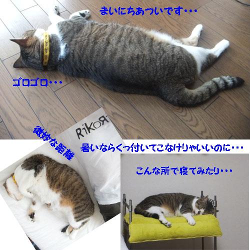 f0032418_10482445.jpg