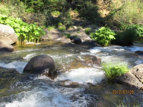 ちょっと涼んでいただきましょうシャスタのマクラウド滝_e0131324_1125063.jpg