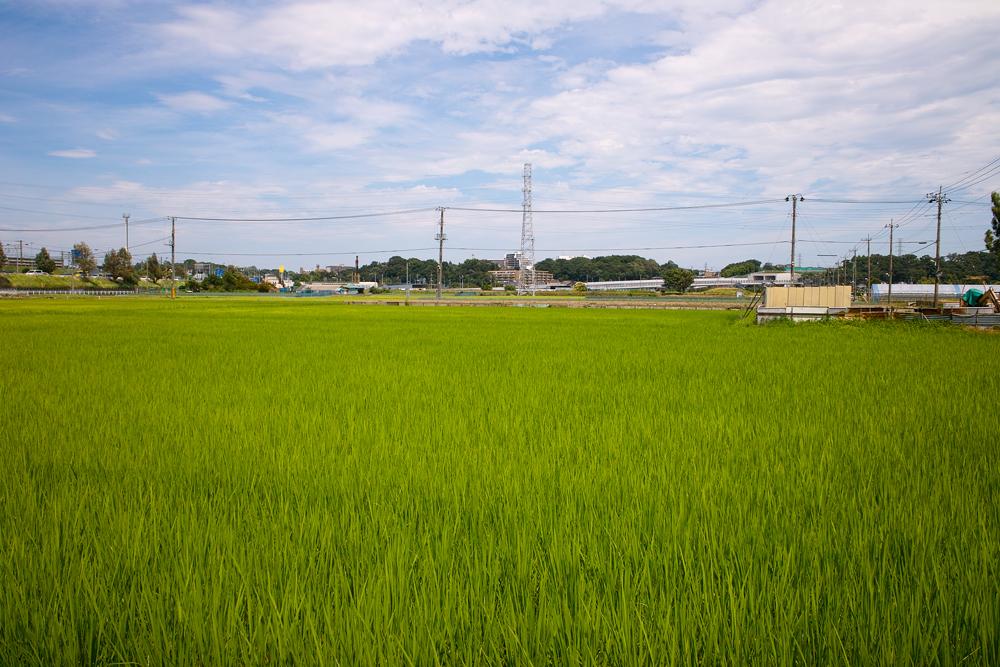 田んぼは青々と。坂川は水田地域へ~GA645WとDP1xでめぐる坂川~_c0223825_147241.jpg