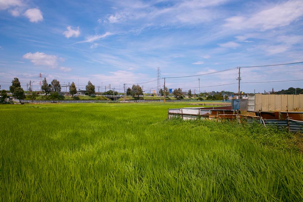 田んぼは青々と。坂川は水田地域へ~GA645WとDP1xでめぐる坂川~_c0223825_1544558.jpg