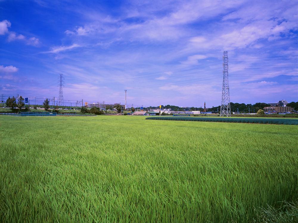 田んぼは青々と。坂川は水田地域へ~GA645WとDP1xでめぐる坂川~_c0223825_2104662.jpg