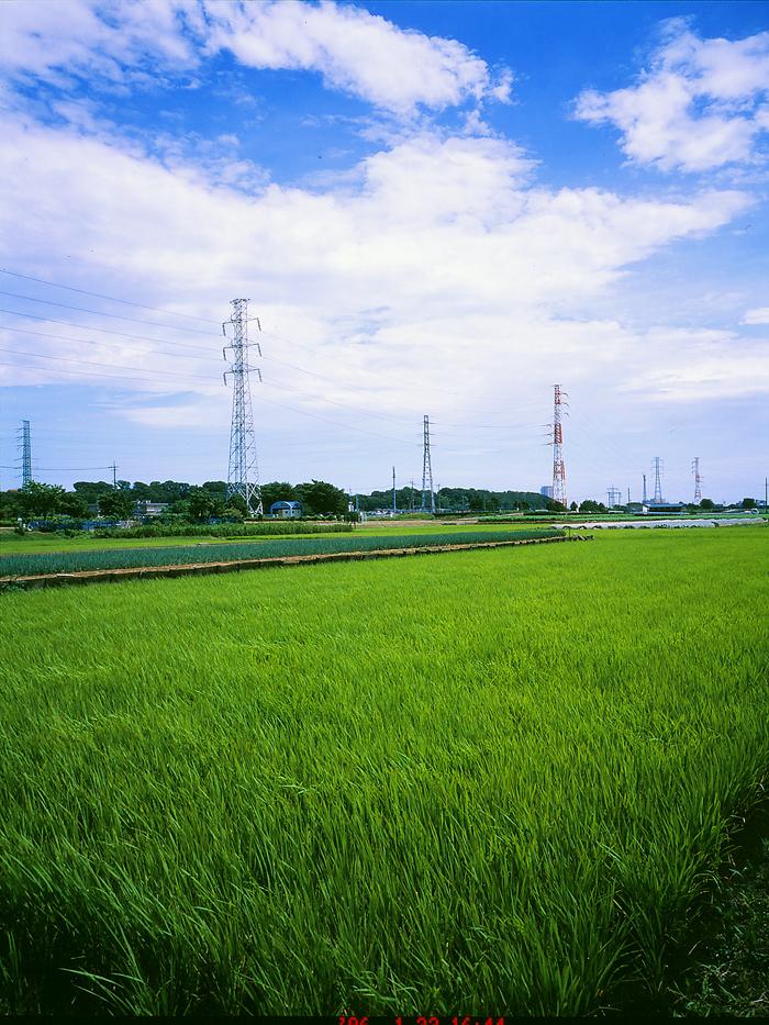 田んぼは青々と。坂川は水田地域へ~GA645WとDP1xでめぐる坂川~_c0223825_2171510.jpg