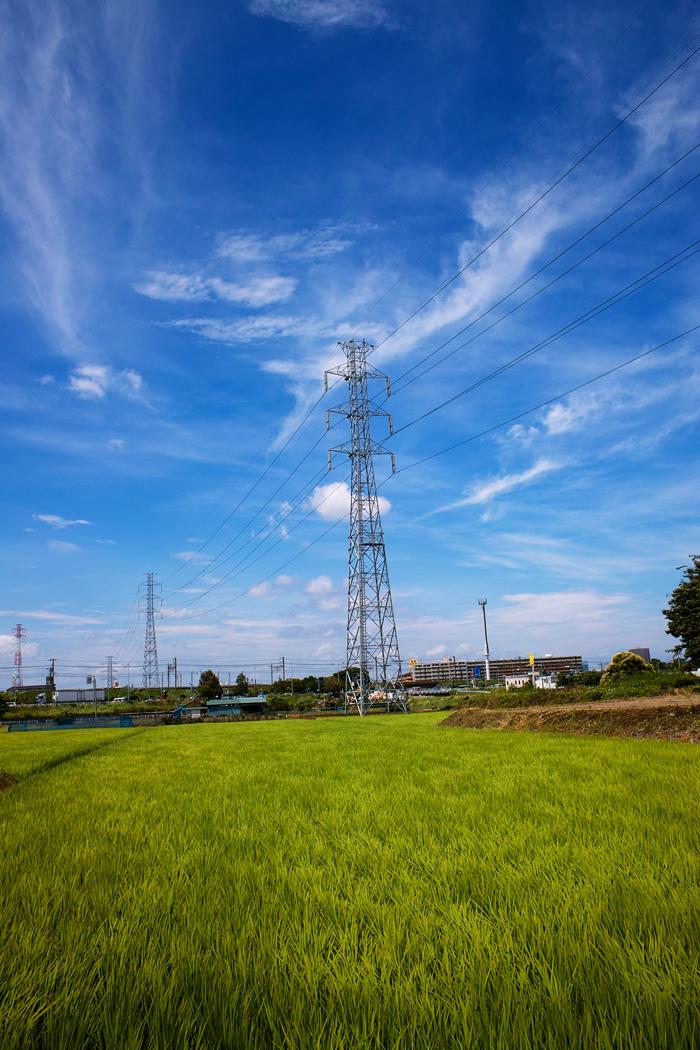 田んぼは青々と。坂川は水田地域へ~GA645WとDP1xでめぐる坂川~_c0223825_2215289.jpg