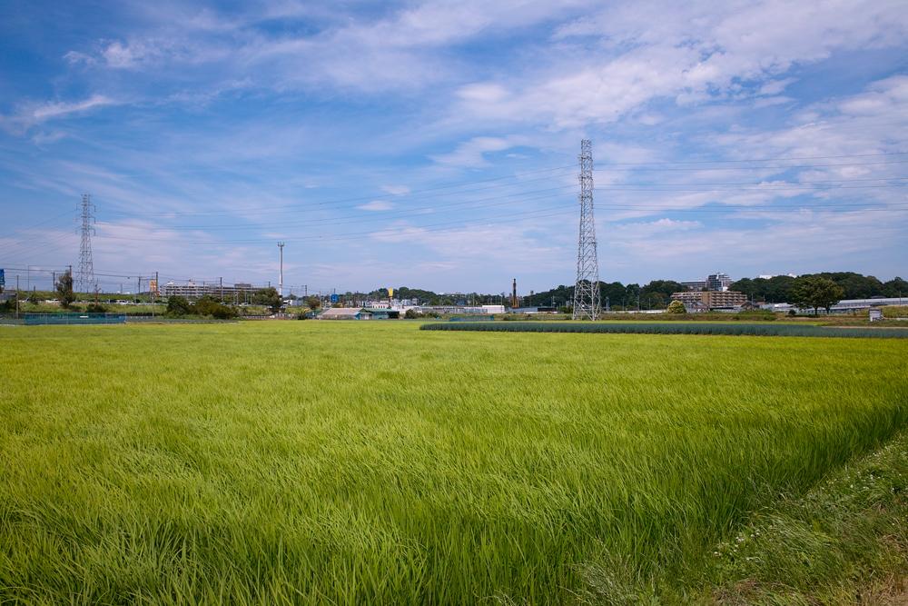 田んぼは青々と。坂川は水田地域へ~GA645WとDP1xでめぐる坂川~_c0223825_295727.jpg