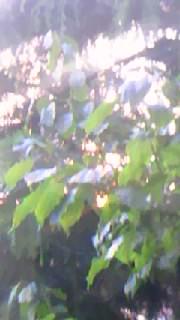 f0077325_227936.jpg