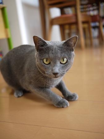 猫のお友だち 銀くん編。_a0143140_2113472.jpg
