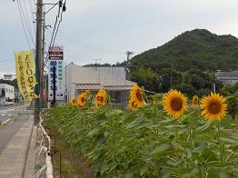 ヒマワリサイタ、ナツサカリ_e0175370_20571017.jpg
