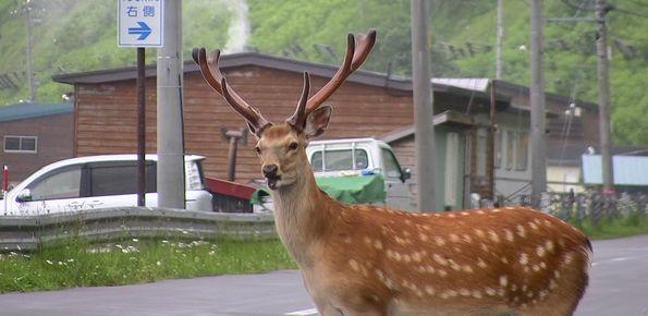 北海道 その4_d0020180_15151952.jpg