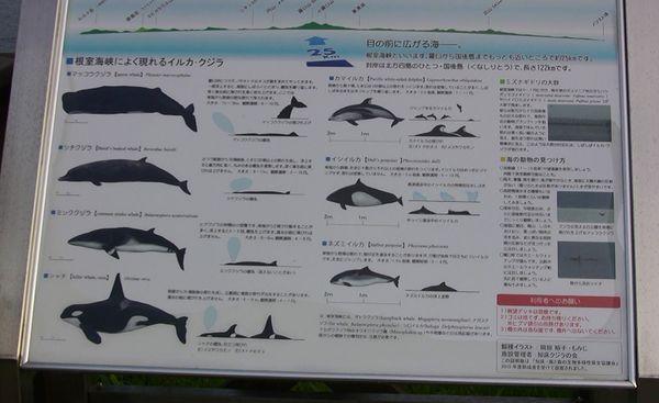 北海道 その5_d0020180_17492955.jpg