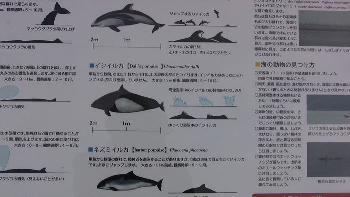 北海道 その5_d0020180_17495412.jpg