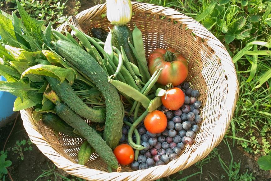毎日自家製野菜_f0163491_2121059.jpg