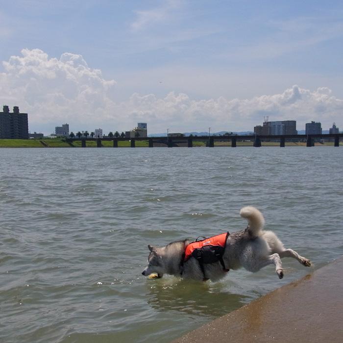 暑中お見舞い_c0049299_201216.jpg