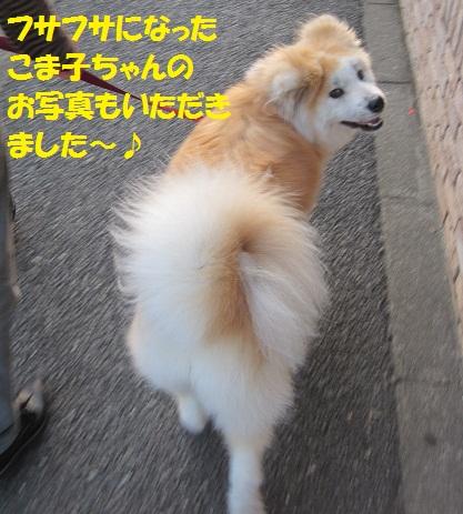 f0121712_15233100.jpg