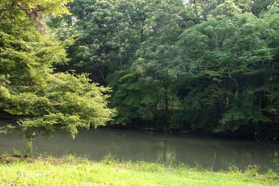 夏の植物園1_e0048413_2241031.jpg