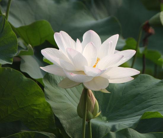 夏の植物園1_e0048413_22412080.jpg