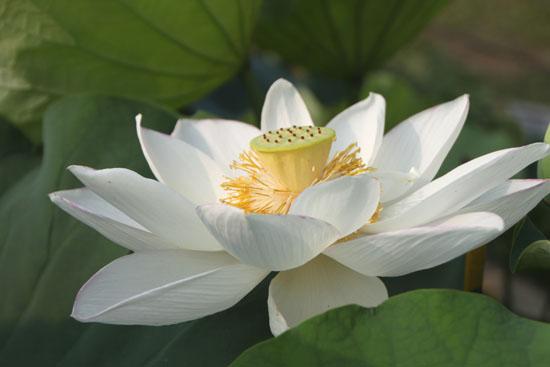 夏の植物園1_e0048413_22413355.jpg