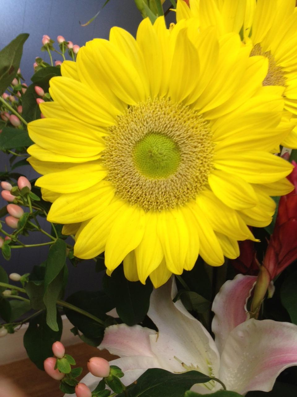 今週のお花とセール情報_a0200423_2020427.jpg
