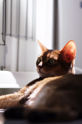 [猫的]日向ボッコ_e0090124_022648.jpg