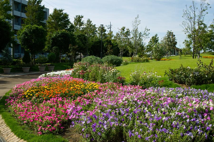 夏のゆいの花公園特集を始めます(本日2本目の記事)_c0223825_749108.jpg