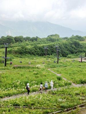 白馬五竜高山植物園_f0012744_12591834.jpg