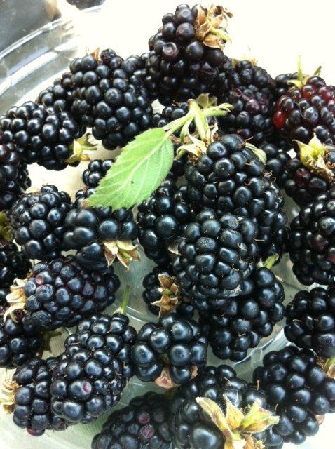 トマトの誘引と ズッキーニの株を抜き始めます・・ブラックベリーの収穫も・・_c0222448_1240648.jpg