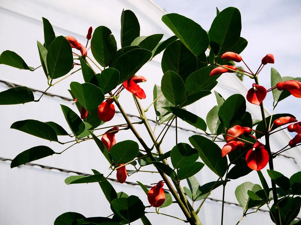和歌山県植物公園緑花センター _b0093754_2341937.jpg