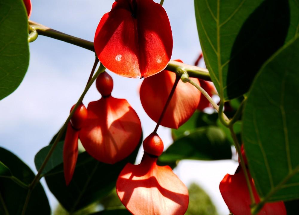 和歌山県植物公園緑花センター _b0093754_2343045.jpg