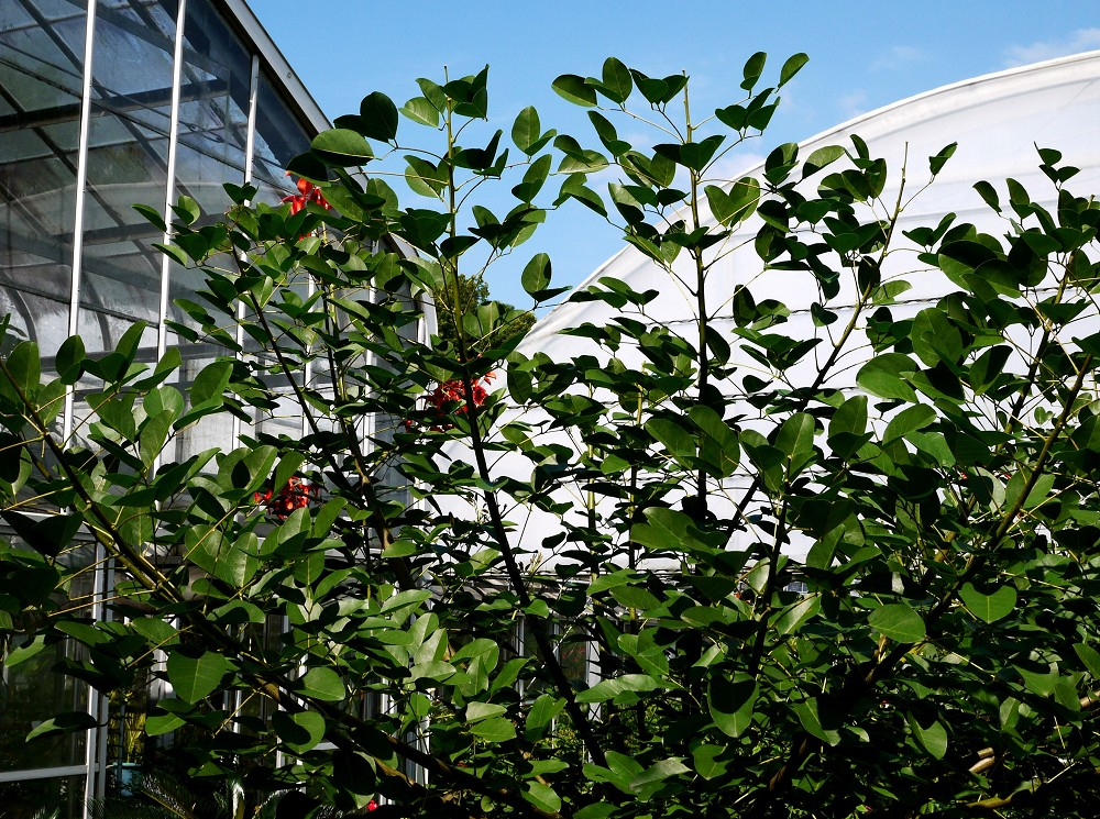 和歌山県植物公園緑花センター _b0093754_234631.jpg