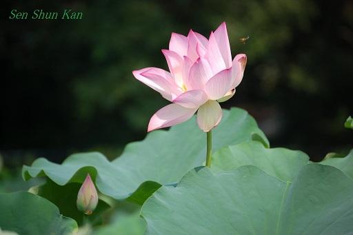植物園 2012年夏_a0164068_16544530.jpg