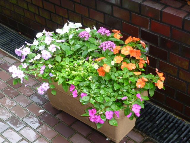 花盛り!_f0200477_23153157.jpg