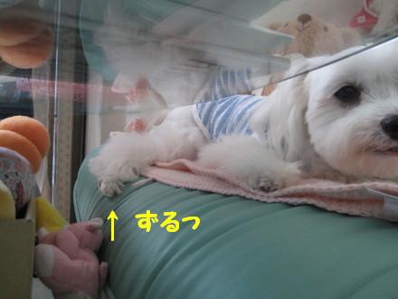 b0193480_1682325.jpg