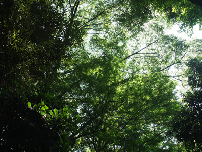 森に吹く風_a0180681_16533020.jpg