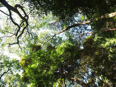 森に吹く風_a0180681_16533383.jpg