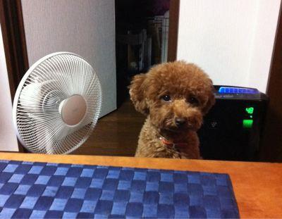 暑い日々_f0009782_21495248.jpg