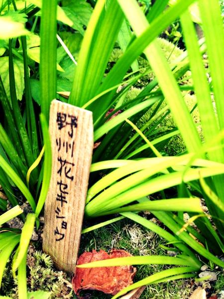スタバ原宿に天野さんの写真集が_e0240394_147244.jpg