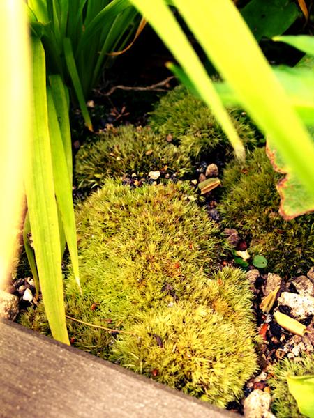 スタバ原宿に天野さんの写真集が_e0240394_147439.jpg