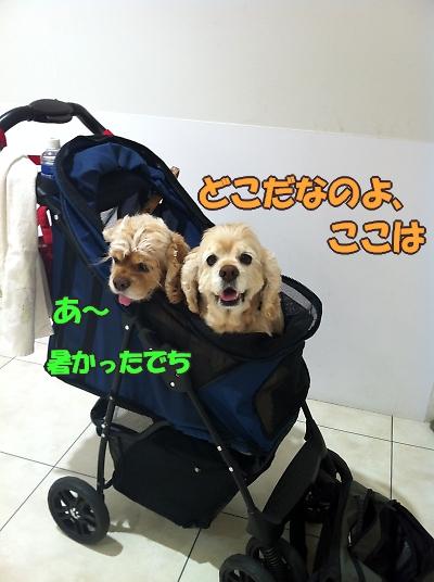 b0067012_18301268.jpg