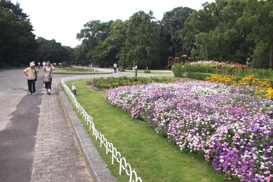 夏の植物園2_e0048413_20501188.jpg