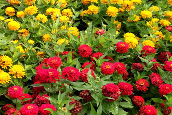 夏の植物園2_e0048413_20503642.jpg