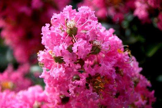 夏の植物園2_e0048413_20504738.jpg