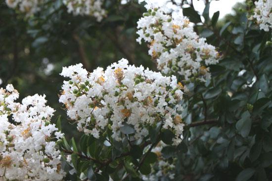 夏の植物園2_e0048413_2051027.jpg