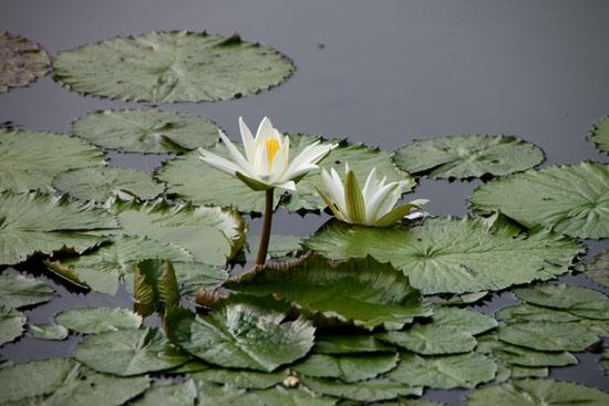 夏の植物園2_e0048413_20511199.jpg