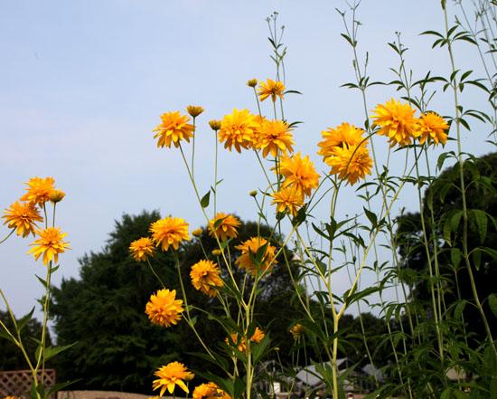 夏の植物園2_e0048413_20513148.jpg
