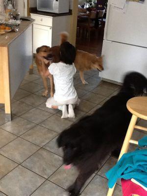 Love Dogs_f0105015_16335726.jpg
