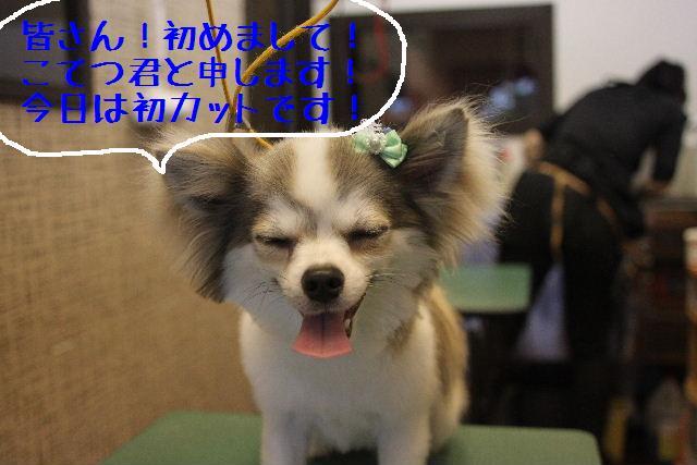 b0130018_0482567.jpg