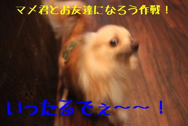 b0130018_0544457.jpg